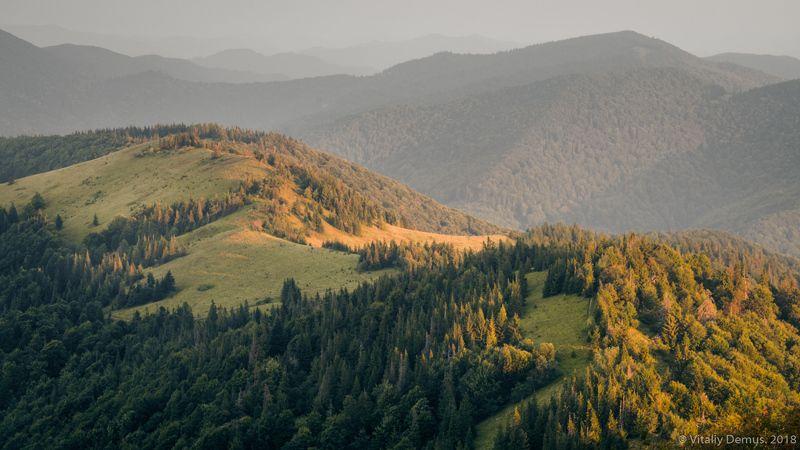 горы, лето, пейзаж, хребет, зеленый, лес, рассвет, боковой свет, утро, солнечный, карпаты, панорама, природа Утро в горах. Сколевские Бескиды. Карпаты.photo preview