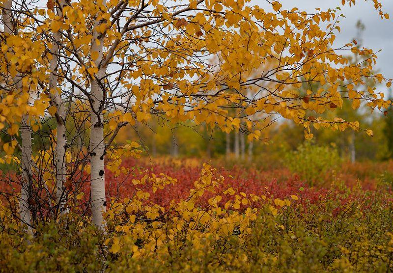 осень, природа, сибирь Краски осениphoto preview