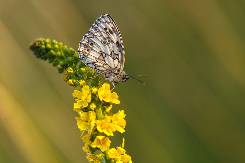 motyl,butterfly,natura,nature,polska,poland,canon,6d, Siedzimy i czekamyphoto preview