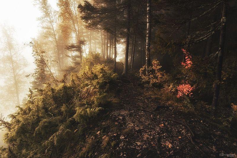 усьвенские столбы, усьва, рассвет, туман,скала, тропа, пермский край, свет, Магия туманаphoto preview