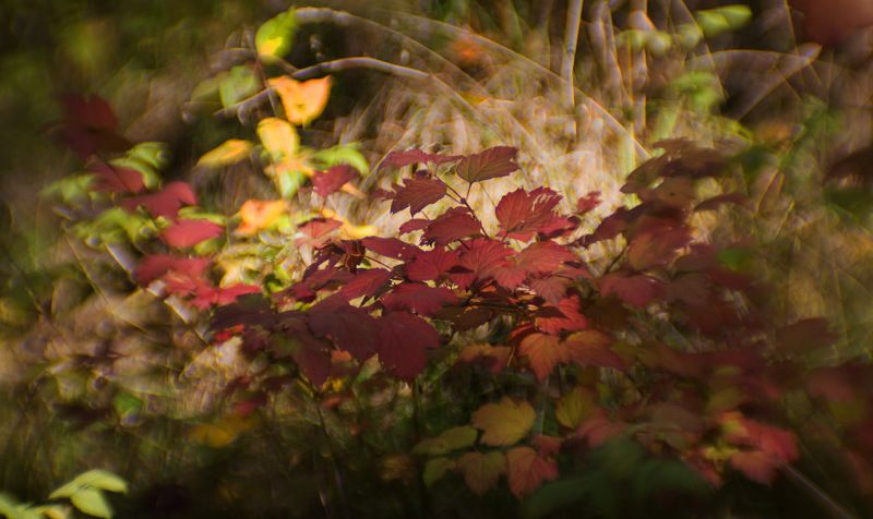Осенний сон наяву...photo preview