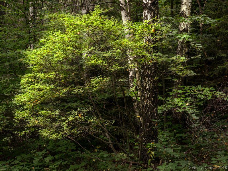 Летом в лесу. Сколевские Бескиды. Карпаты.photo preview