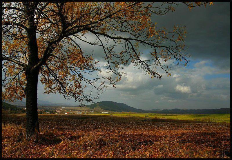 Autumn passionphoto preview