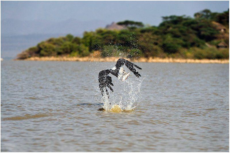 Рыбак по природе.photo preview