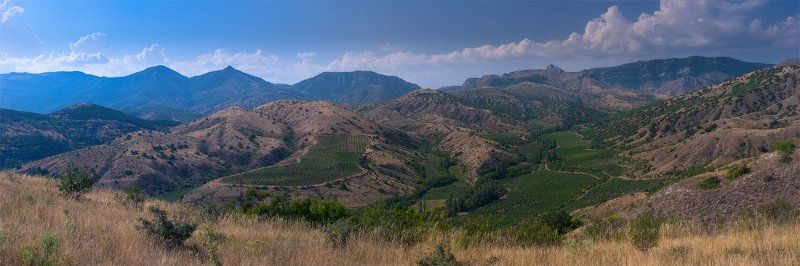 крым, виноградники Виноградники в полденьphoto preview