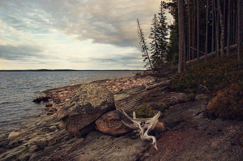 россия, карелия, сегозеро, пейзаж, лес, берег, вода, озеро, камень, коряга, небо, dyadyavasya Каменный берегphoto preview