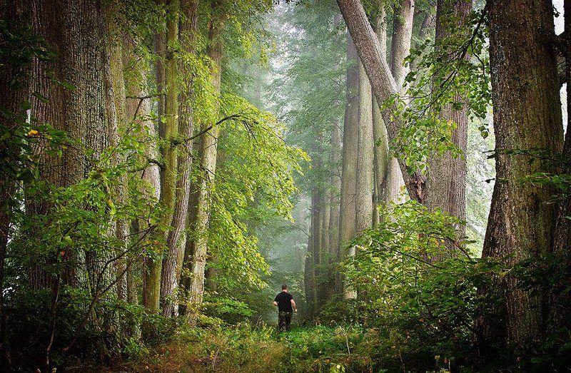 tuman, fog, mist, morning, туман В поисках Спящей Красавицыphoto preview