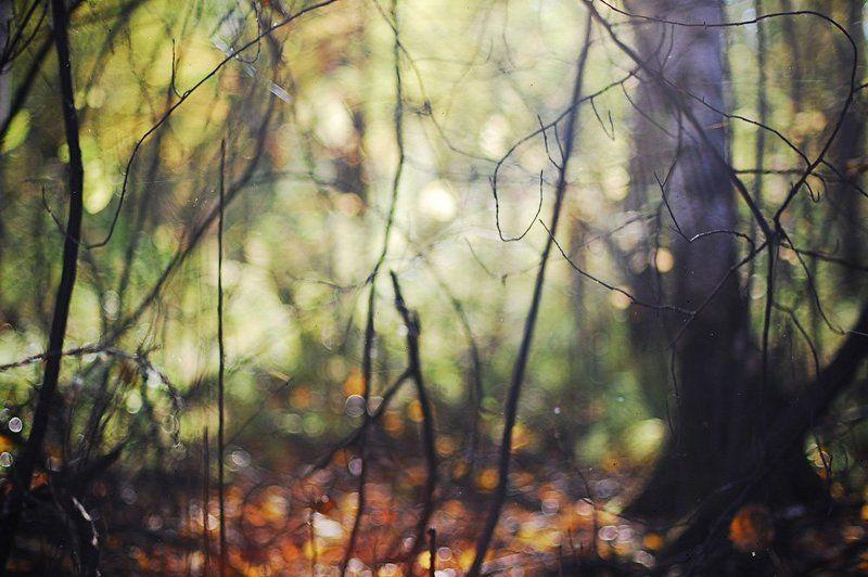лес, осень, nikon, nikon d40, nikkor 50/1.4, autumnphoto preview