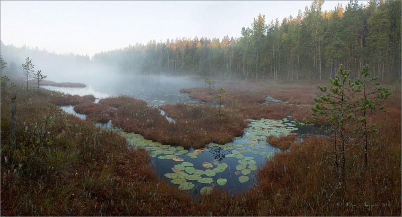 озеро болото туман лес ***photo preview
