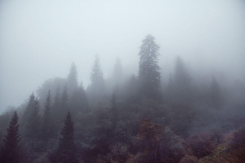 горы, лес, природа, туман, непогода Туманphoto preview