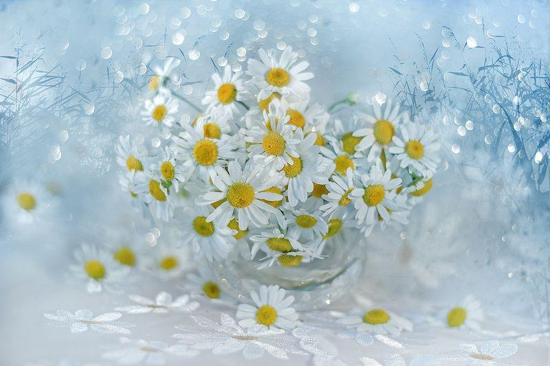 kwiaty,polne,lato,bokeh,martwa natura, flowers, nature, still live Z trawą w tle ...photo preview