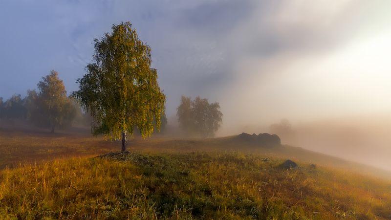 осень, рассвет, туман Осенние грёзыphoto preview