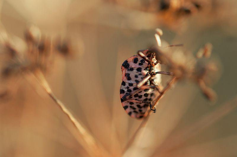 Леопард в джунглатаphoto preview