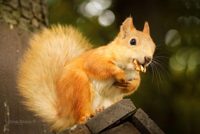 природа, парк, животные, белка, орех С орешкомphoto preview