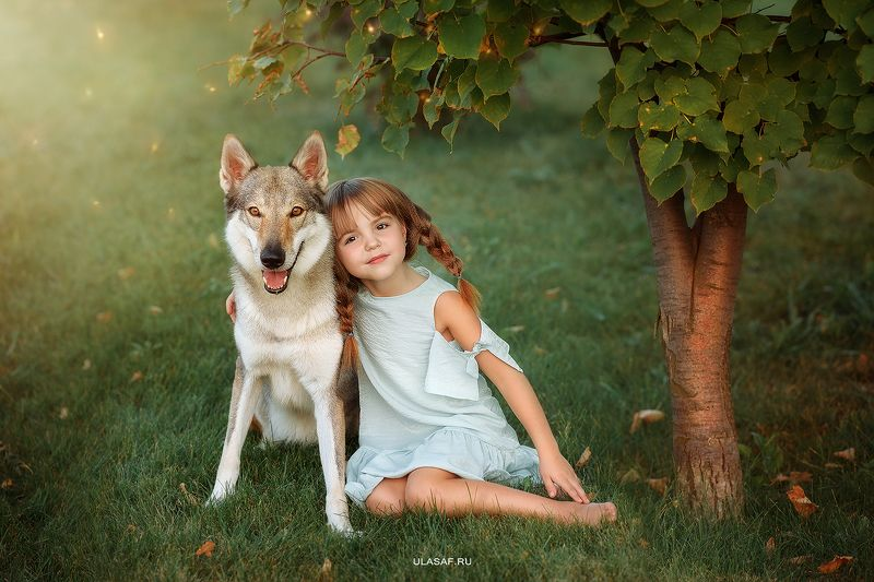портрет, лето, девочка, girl, summer, волк, закат, вечер, животные, собака, dog, wolf, друзья, солнышко, лучи, happy, happiness, сказка, волшебство Алена и волкphoto preview