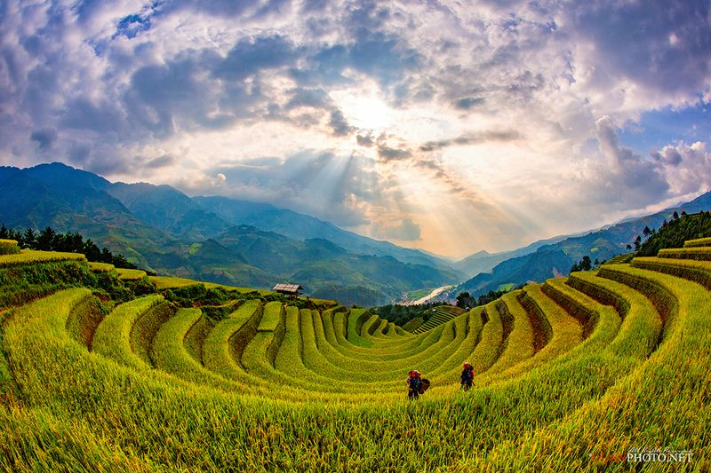 quanphoto, landscape, sunset, sundown, rice, valley, terraces, mountains, clouds, farmland, agriculture, vietnam, asia, golden, harvest Terraced Fields in Sunsetphoto preview