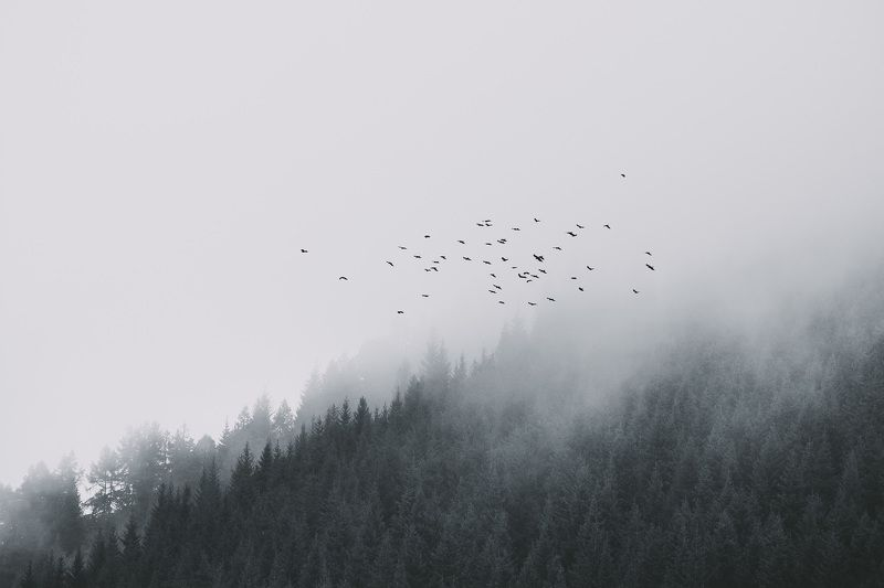 пейзаж, природа, горы, туман, лес, птицы, непогода, полет Стражи лесаphoto preview