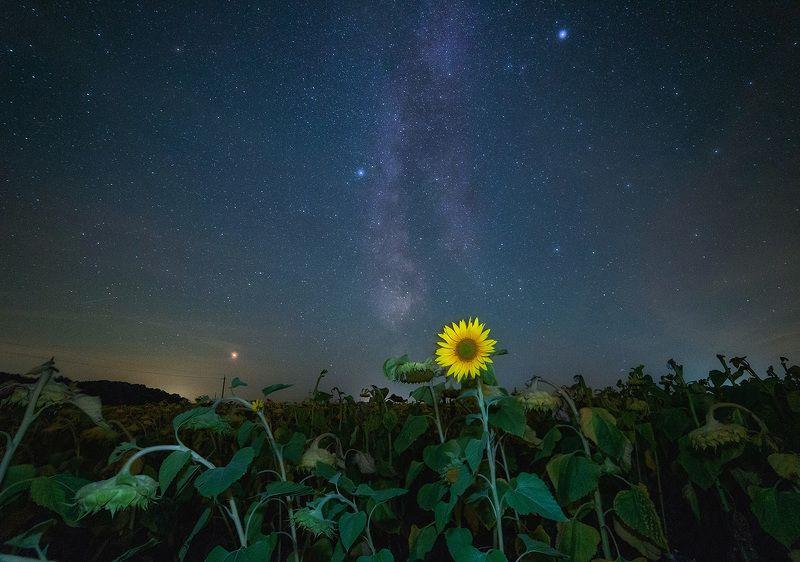 ночь, звезды, подсолнухи Чужой среди своихphoto preview