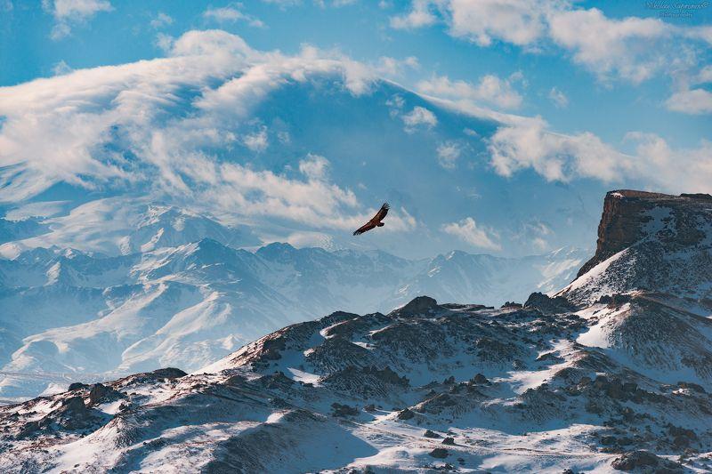 эльбрус, бермамыт, орел, орлы, птицы, горы. заснеженные горы, снег, приэльбрусье Легенды гор. Скала Прометея, орел Эфон у подножья Олимпа Кавказаphoto preview