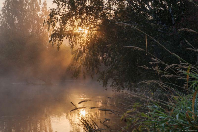 река, утро, рассвет,туман,воря, подмосковье, сентябрь,пейзаж,деревья, природа Солнечное сентябрьское утроphoto preview