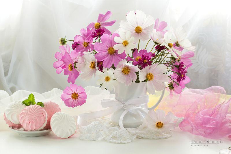 натюрморт, цветы, космея, зефир Нежность космеиphoto preview