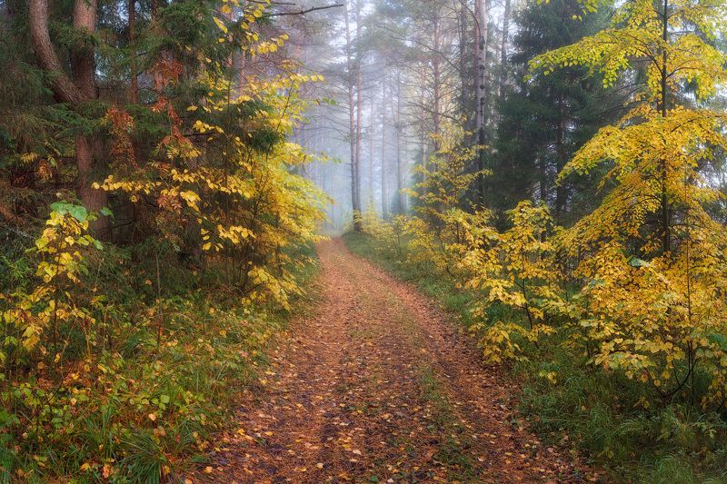 осень, лес, туман, листья Прогулка по осеннему лесуphoto preview