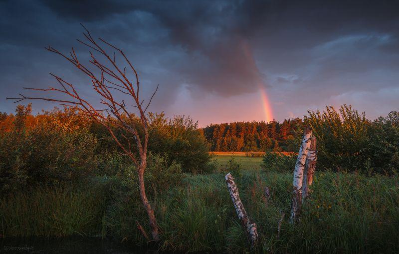 радуга, болото, вечер, лето, тучи, гроза, закат Сказка летнего вечера фото превью