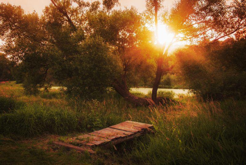 фото, природа, пейзаж, лес, лето, закат Тишинаphoto preview