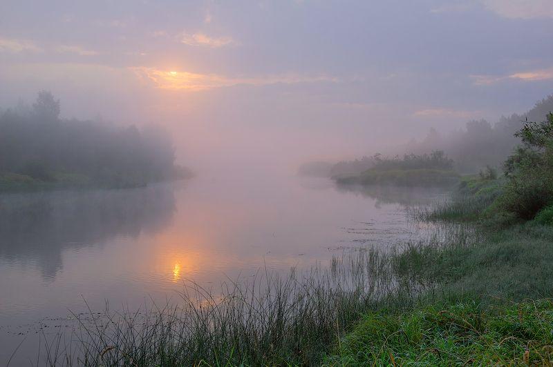 река, туман, рассвет, утро, молога в туманеphoto preview