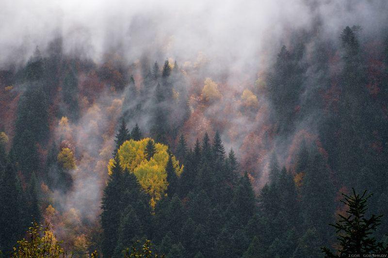 кавказ,домбай,горы,осень,лес,облакак,туман,сердце,дождь,пейзаж,природа, Осеннее сердце горphoto preview