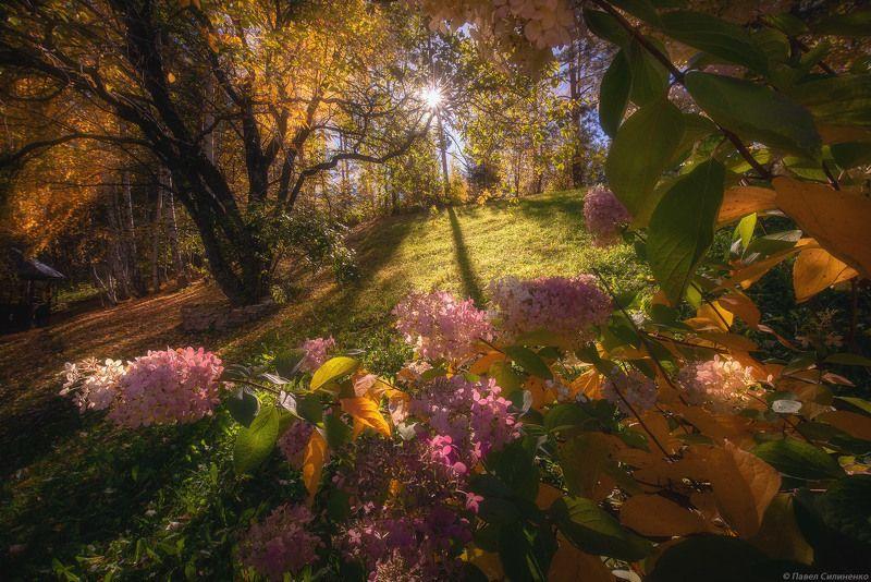 пейзаж, осень, лес, свет, солнце, желтый, алтай Гортензияphoto preview