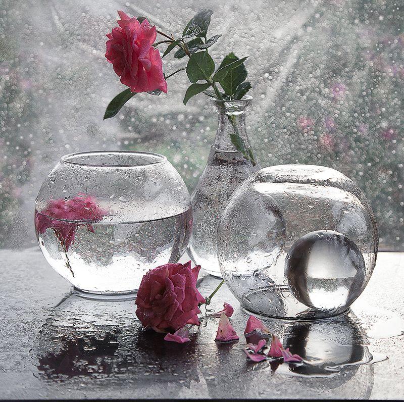 капли роза  стекло Летний дождьphoto preview