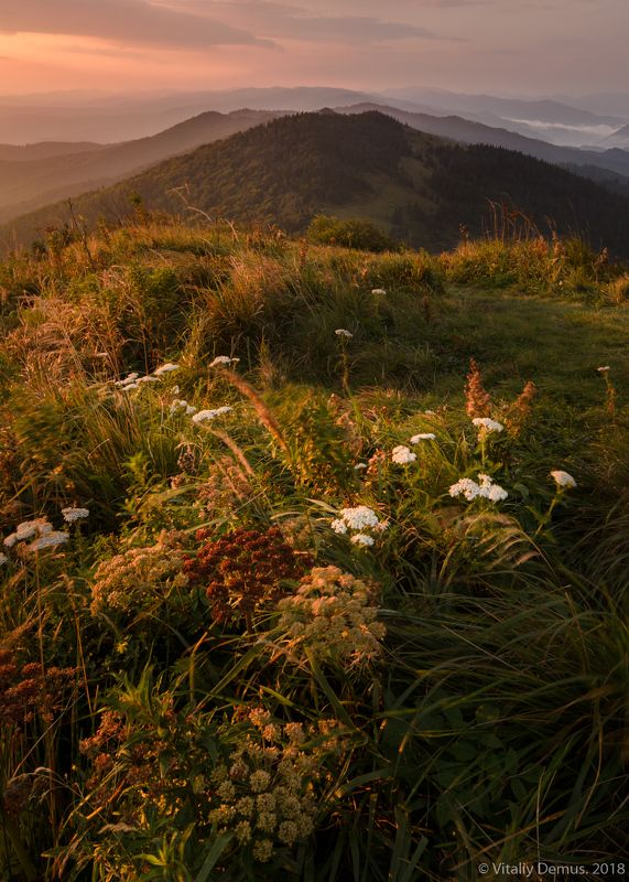 горы, лето, пейзаж, хребет, зеленый, лес, рассвет, боковой свет, утро, солнечный, карпаты, природа, широкий угол Ветренная вершина. Карпаты. г.Параска (г. Парашка)photo preview