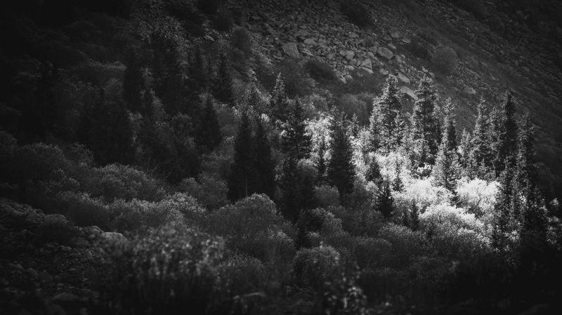 пейзаж, природа, горы, ели, лес, , свет, чернобелое Луч светаphoto preview
