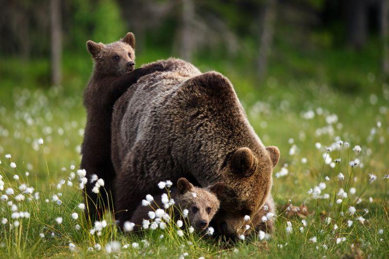 Медвежьи истории - 4photo preview