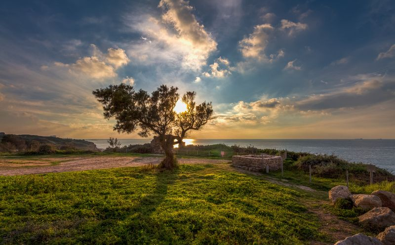 За ветвями гаснет солнцеphoto preview