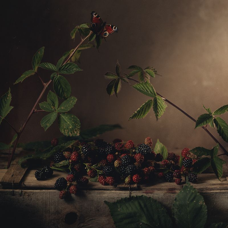 ежевика, натюрморт, осень ***photo preview