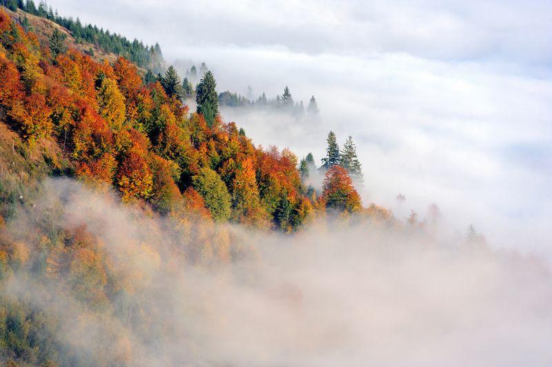туман, карпаты, лес, гори, осень, fog, forest, autumn, clouds Осенний туманphoto preview
