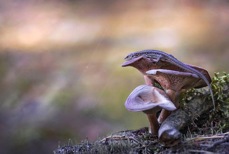 макро, ящерица, гриб, лес ***photo preview