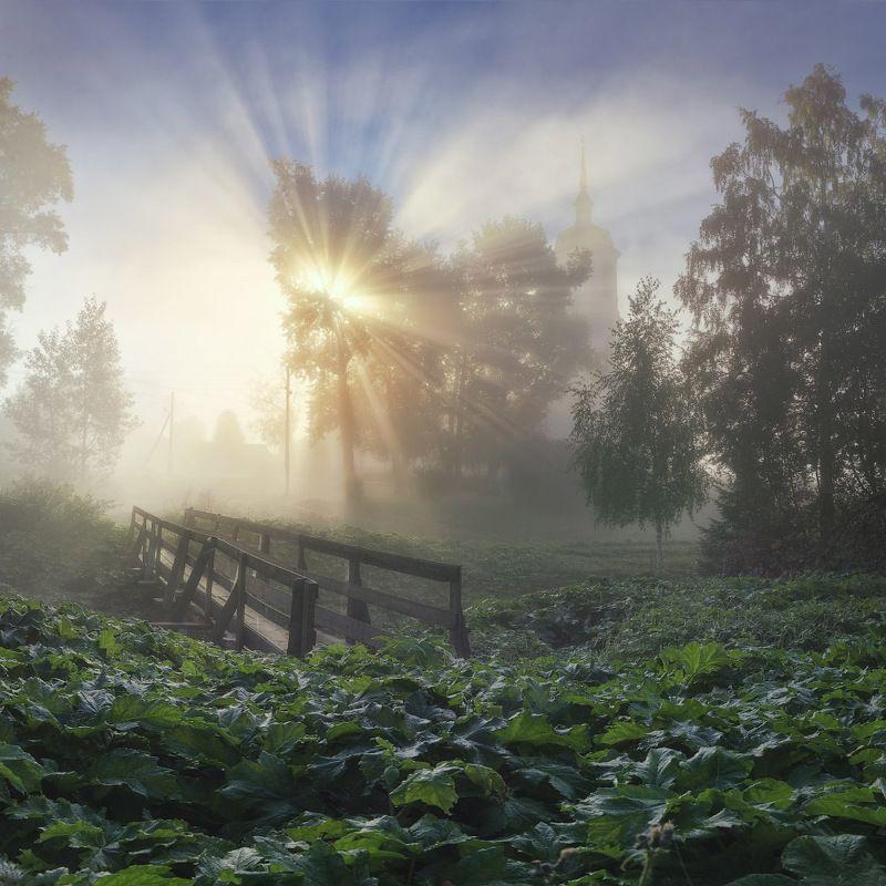 туман, солнце, осень Место, где светphoto preview