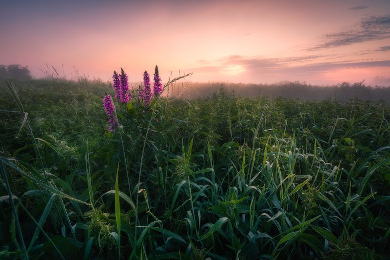 river sky wildflowers fog mist poland podlasie clouds dawn light outdoors Dawn over river Supraśl...photo preview