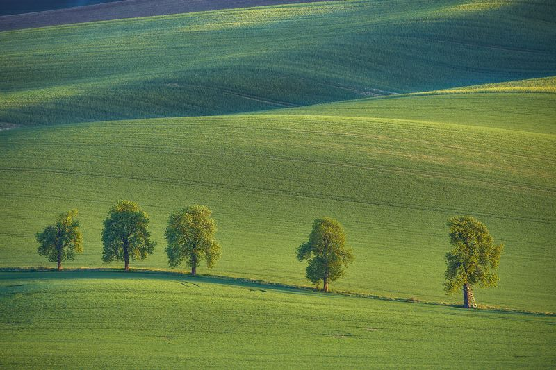 south moravia, moravia, czechia, czech republic, landscape, waves, fields, brown, green, sun, sunset, harvest, sowing, journey, nostalgy, alley, chestnut In a Deep Greenphoto preview