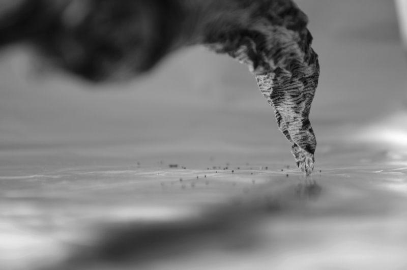 tornado, conceptual, b&w, торнадо, концептуальный Tornadophoto preview