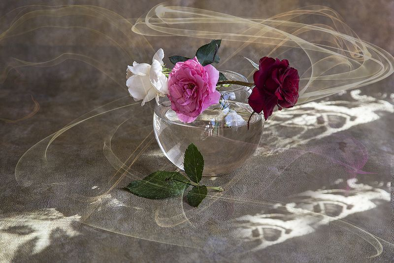 роза Чайной розы ароматphoto preview