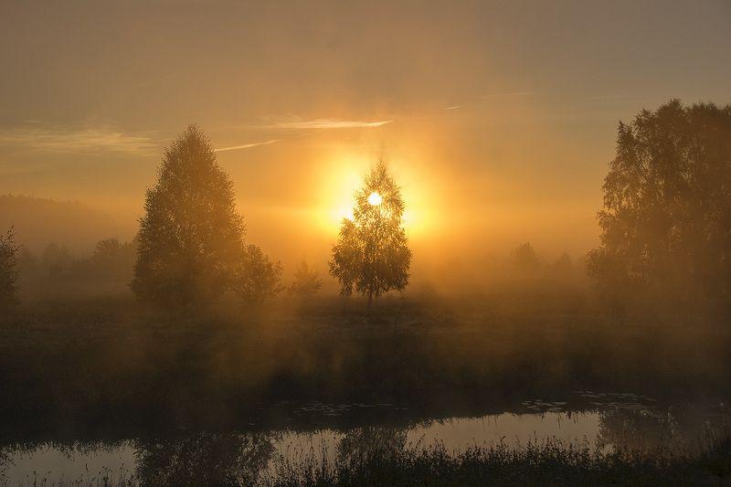 рассвеи туман солце лучи краски золотой рассветphoto preview