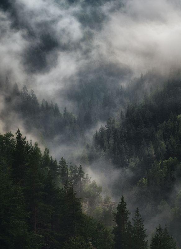 Туманная свежестьphoto preview