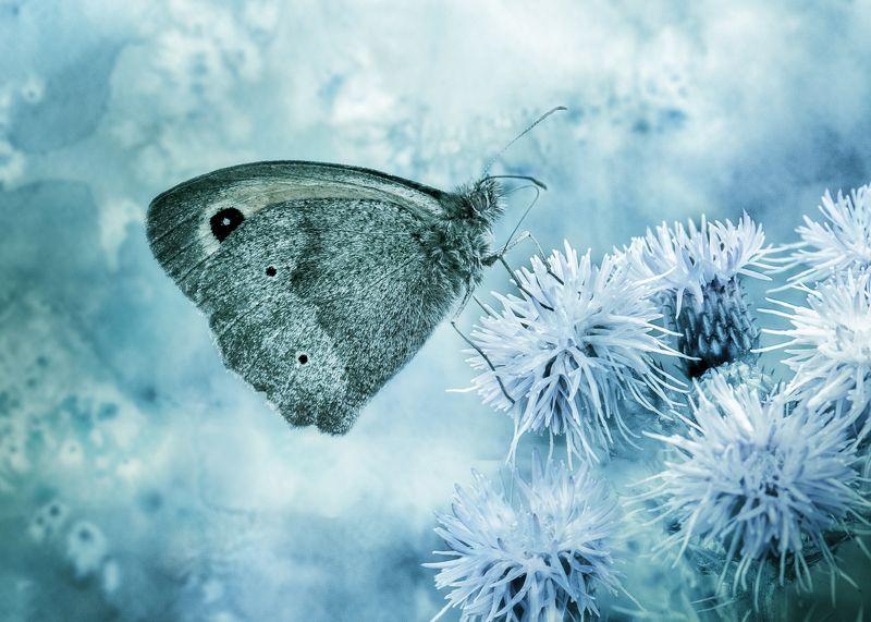 бабочка ...бабочкаphoto preview