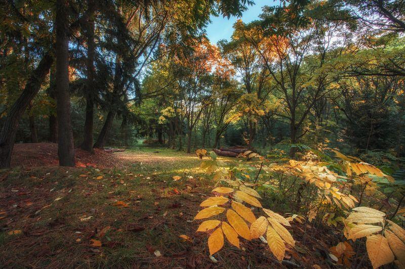 лес, осень, вечер, роща, минск, беларусь Таинственный лесphoto preview