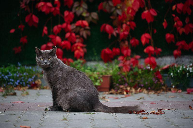кошка Жужаphoto preview