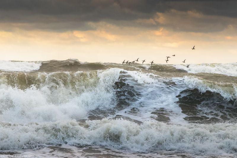 море, шторм, природа, пейзаж, sea, seascape, nature Полет над волнами.photo preview